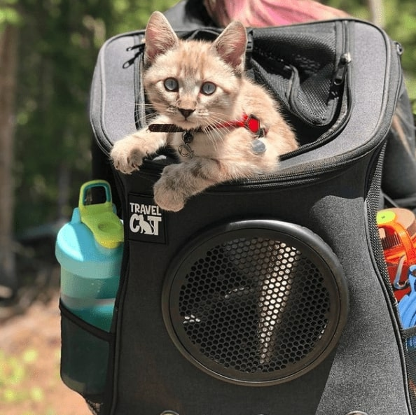 Black backpack that says Travel Cat. There is an orange cat popping its own out of the top. A blue waterbottle is in the pocket on the left side.